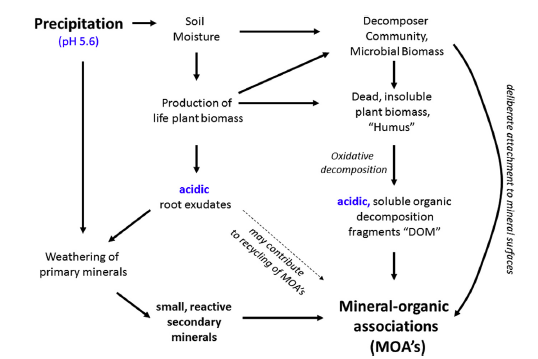Figure 2, showing the causal relationship between moisture supply, plant biomass production, mineral weathering, and the formation of mineral–organic associations, from Kleber et al, 2015.