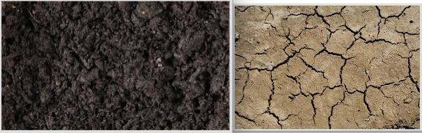 Figure 6, wet and dry soils, from https://www.shutterstock.com/video/search/wet-soil and https://www.featurepics.com/online/Dry-Soil-Background-Photo396566.aspx